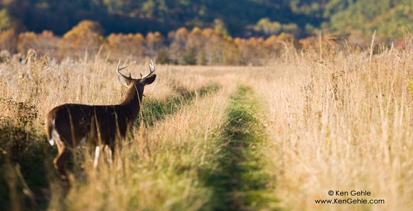 Tennessee Buck by Ken Gehle